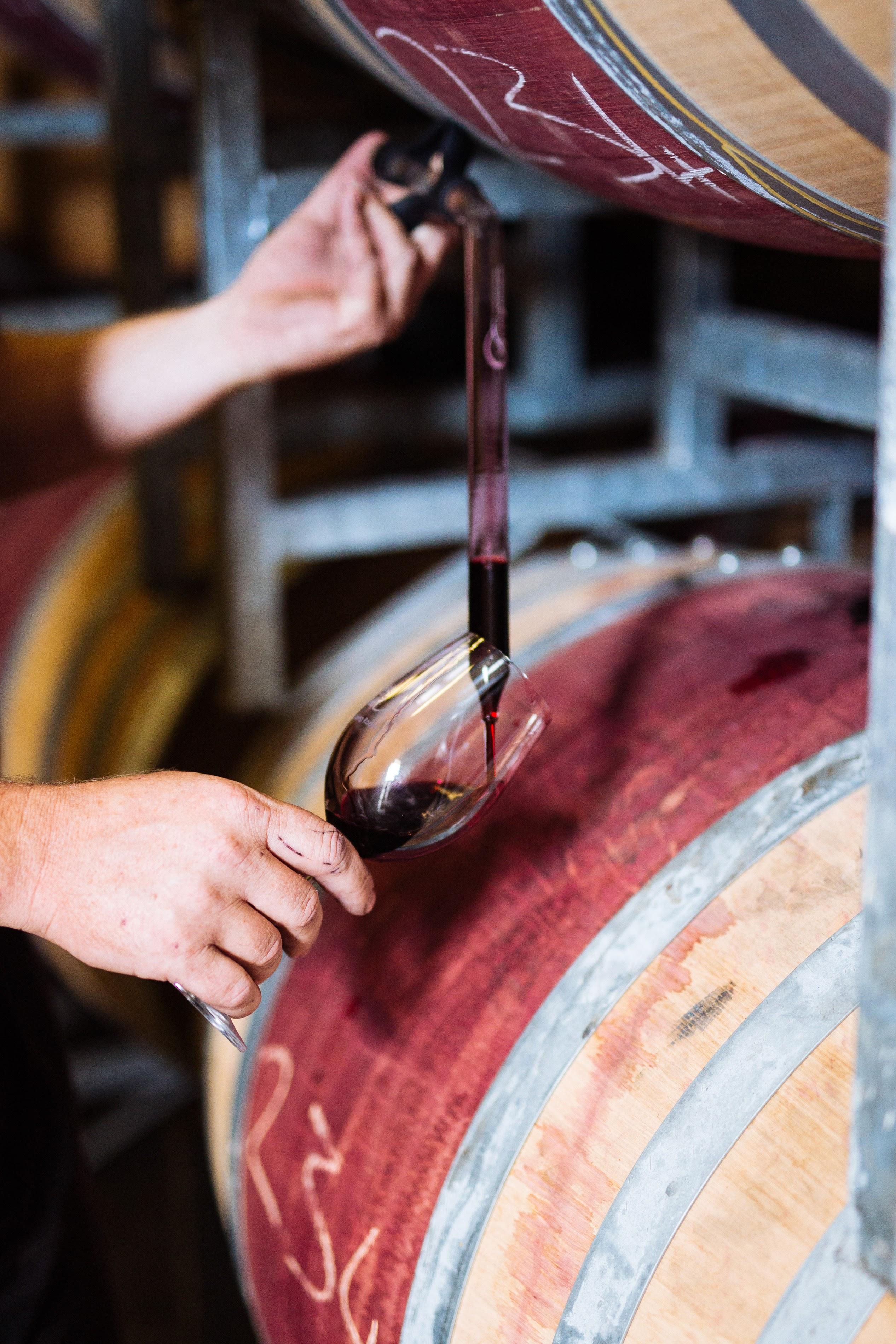 Wine Jargon, Tasting Notes and Food Pairings with Spier Wines   #SpierMyWay